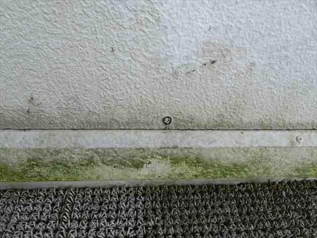 コケや藻の発生